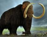 650_1000_mamut-1